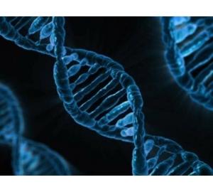 Медики создали генную терапию, защищающую человека от атеросклероза