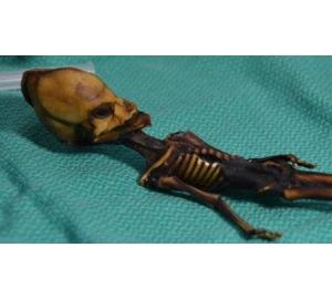 Ученые расшифровали ДНК миниатюрного «пришельца» из пустыни Атакама