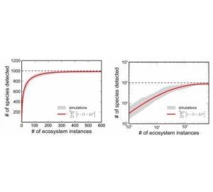 Ученые разработали модель экосистемы, объясняющую «парадокс планктона»