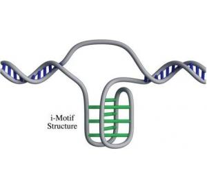 В клетках человека нашли новую форму ДНК