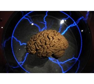 Нейробиологи обнаружили новый тип «мозговых волн»