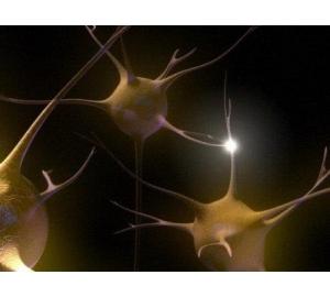 Коммуникация нейронов