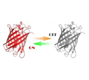 Оранжевый и зеленый свет поможет управлять свойствами белков