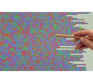 Неизвестное ранее генетическое заболевание нарушает работу иммунной системы